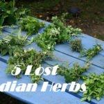 Herbs India Antique