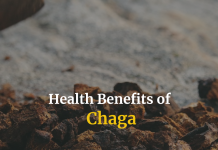 Chaga mushrooms' healing properties