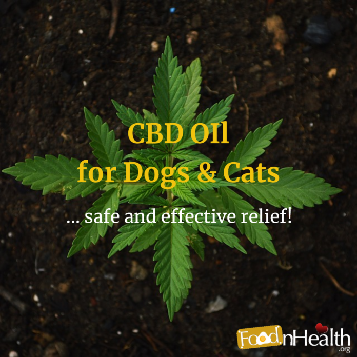 CBD for Dogs & Cats: Hemp Oil Use