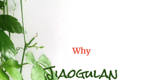 The Health Benefits of Wildcrafted Jiaogulan