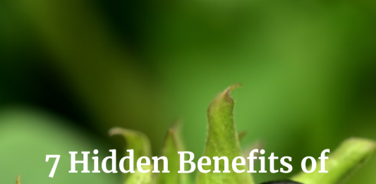 Belladonna: Uses, Side Effects, Interactions, Dosage, and Warning