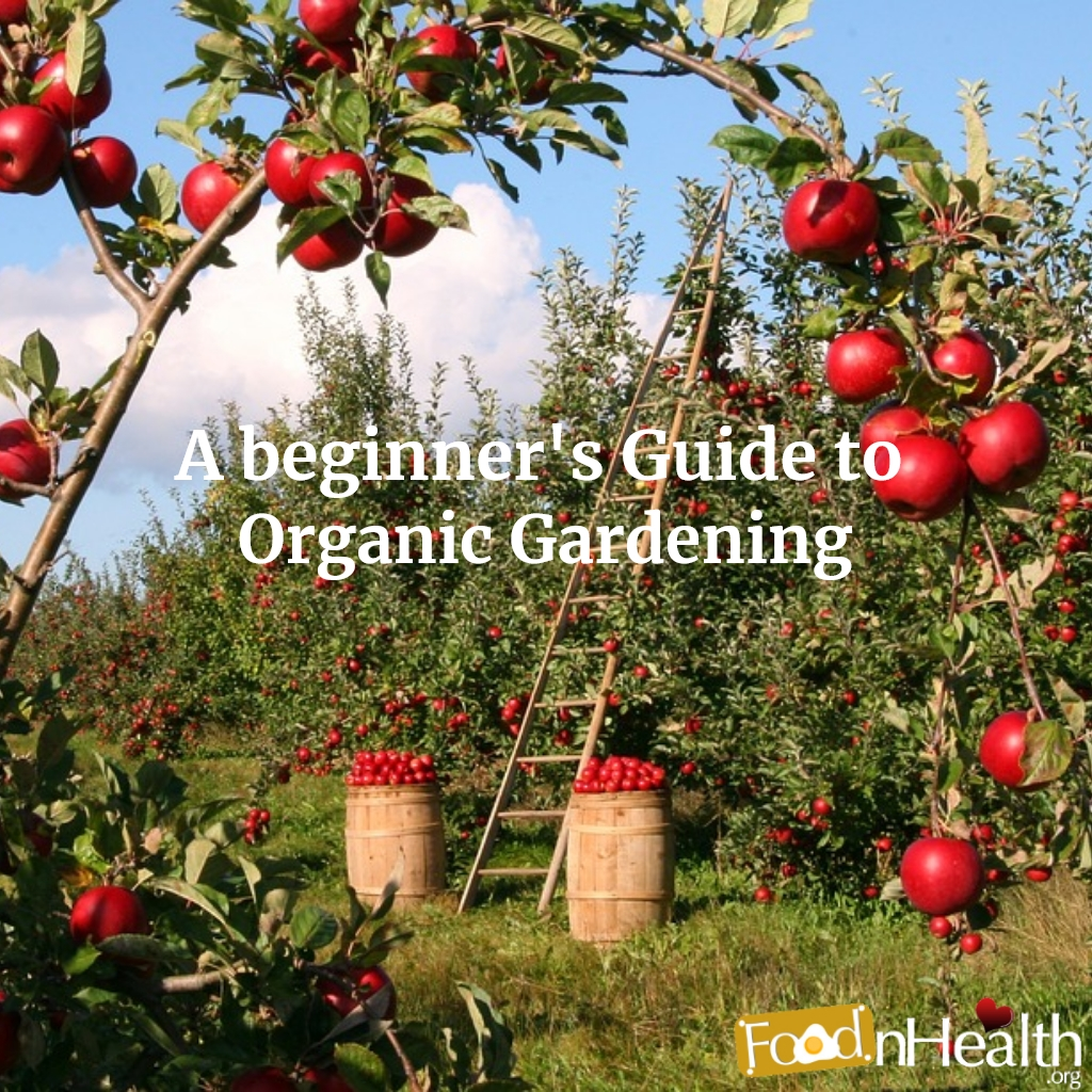 Gardening: Growing Organic Food in Your Backyard