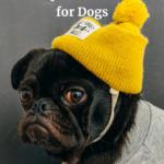 Hemp Oil Versus CBD Oil for Dogs