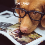 Hemp Oil Versus CBD-Oil for Dogs