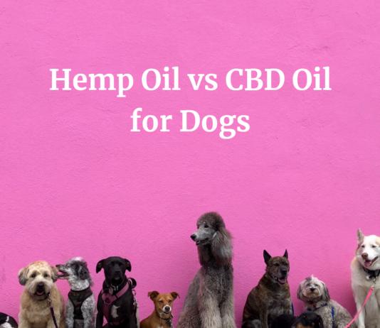 Hemp-Oil vs CBD-Oil for Dogs