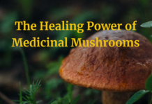 The Healing Power of Mushrooms