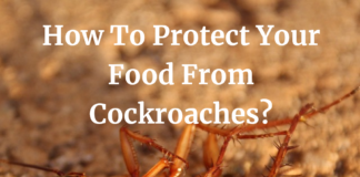How To Protect Your Food From Cockroaches?