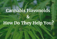 Cannabis Flavonoids & How Do They Help