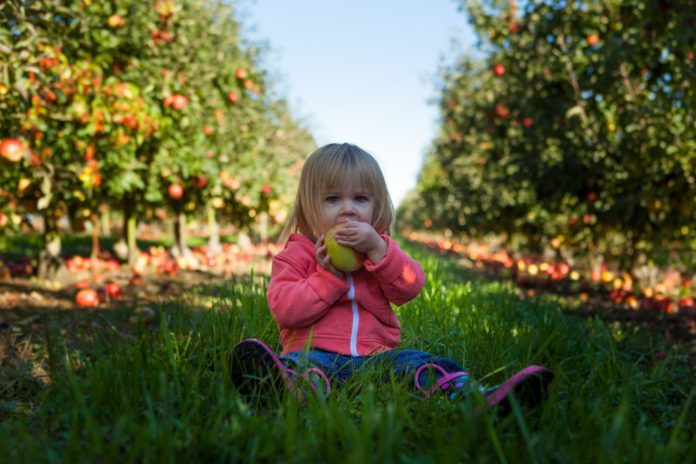 Establishing Healthy Eating Habits for Young Children