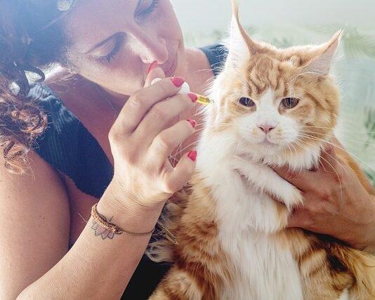 Best CBD Cat Treats
