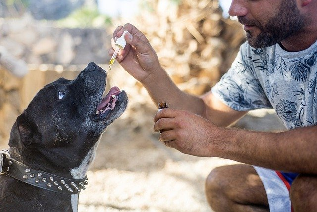 Advantages of CBD Oil For Dogs