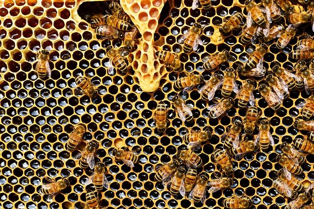 Raw Honey - Health Benefits